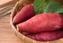 血糖高可以吃红薯吗-三思生活网