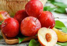 柿子不能和什么水果一起吃-三思生活网