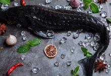 黑鱼不适合什么人吃-三思生活网