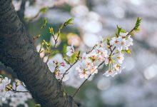 立春吃什么传统美食-三思生活网