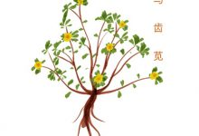 茶树菇炖柴鸡-三思生活网