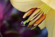 产妇能用珍珠粉面膜吗(珍珠粉做面膜)-三思生活网