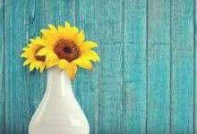 蜂蜜美容祛斑方法(白醋加蜂蜜祛斑方法)-三思生活网