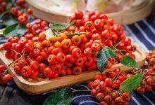 什么水果美白效果最好 吃什么水果可以美白-三思生活网