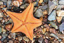 海星怎么吃 海星的吃法-三思生活网