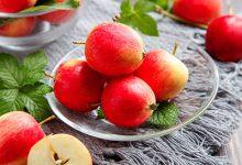 海棠花的果实能吃吗 海棠果的功效与作用-三思生活网
