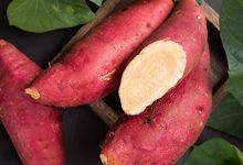 红薯的功效与作用禁忌 红薯的营养价值与注意事项-三思生活网