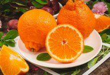 柑橘和桔子有什么区别 柑橘的功效与作用-三思生活网