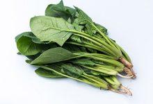 菠菜的功效与作用禁忌 吃菠菜的好处及注意事项-三思生活网