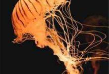 孕后期下巴长痘什么原因(怀孕下巴长痘痘是哪里的问题)-三思生活网