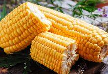 一根玉米的热量 一根玉米的热量是多少大卡-三思生活网