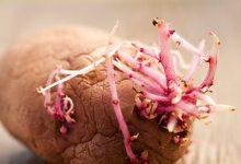 发了芽的土豆可以吃吗 土豆怎么保存不发芽-三思生活网