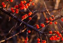 沙棘色口红是什么颜色 沙棘色口红色号推荐-三思生活网