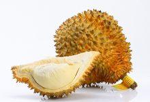 榴莲是什么季节的水果 榴莲的功效与作用-三思生活网