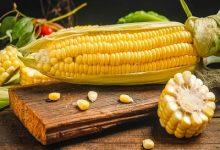 女人天天吃玉米好吗 女人天天吃玉米好不好-三思生活网