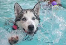 游泳后要滴眼药水吗 滴什么眼药水-三思生活网