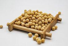 黄豆的功效与作用禁忌 吃黄豆的好处及注意事项-三思生活网