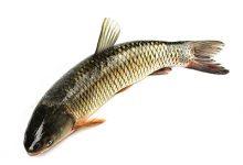 草鱼的营养价值及功效 吃草鱼的好处-三思生活网