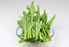 苦麻菜的功效与作用 吃苦麻菜的好处有哪些-三思生活网