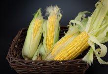 早上吃玉米好吗 吃玉米的注意事项-三思生活网
