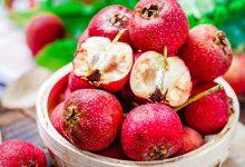 坐月子必吃的12种水果 坐月子必吃的水果有哪些-三思生活网