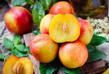 吃油桃的好处与坏处 吃油桃的利弊-三思生活网