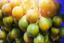 槟榔是什么东西 长期吃比槟榔的坏处-三思生活网